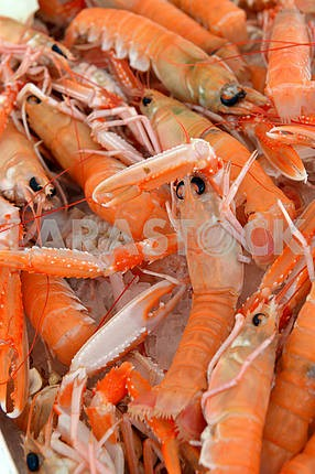 Background of fresh scampi for sale