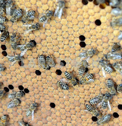 a swarm of bees on honeycombs