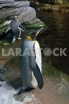 penguins in the Arctic aquarium
