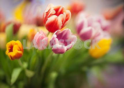 Bouquet of colored tulips