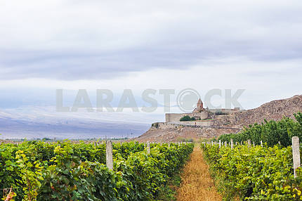 Panoramic views of the vineyards and Khor Virap.