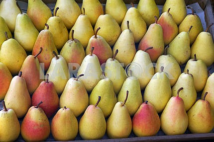 Roadside fruit market. Pears