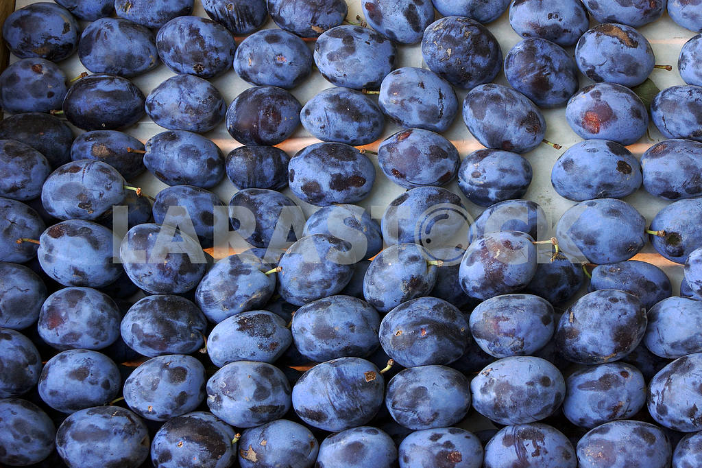 Roadside fruit market. Plums — Image 20067