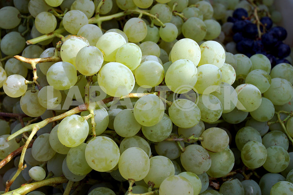 Country fairs. Grapes. — Image 20076