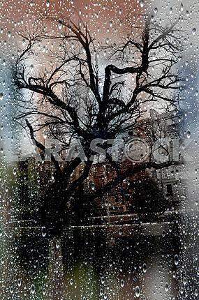 GLASS RAIN. . .
