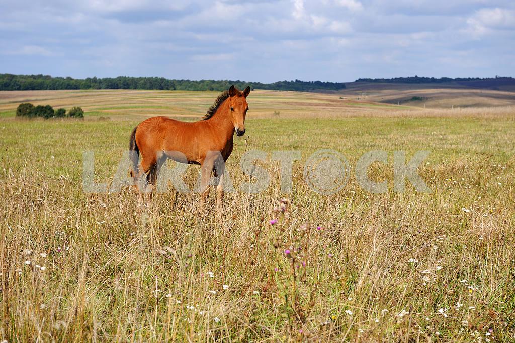 Horse — Image 2014