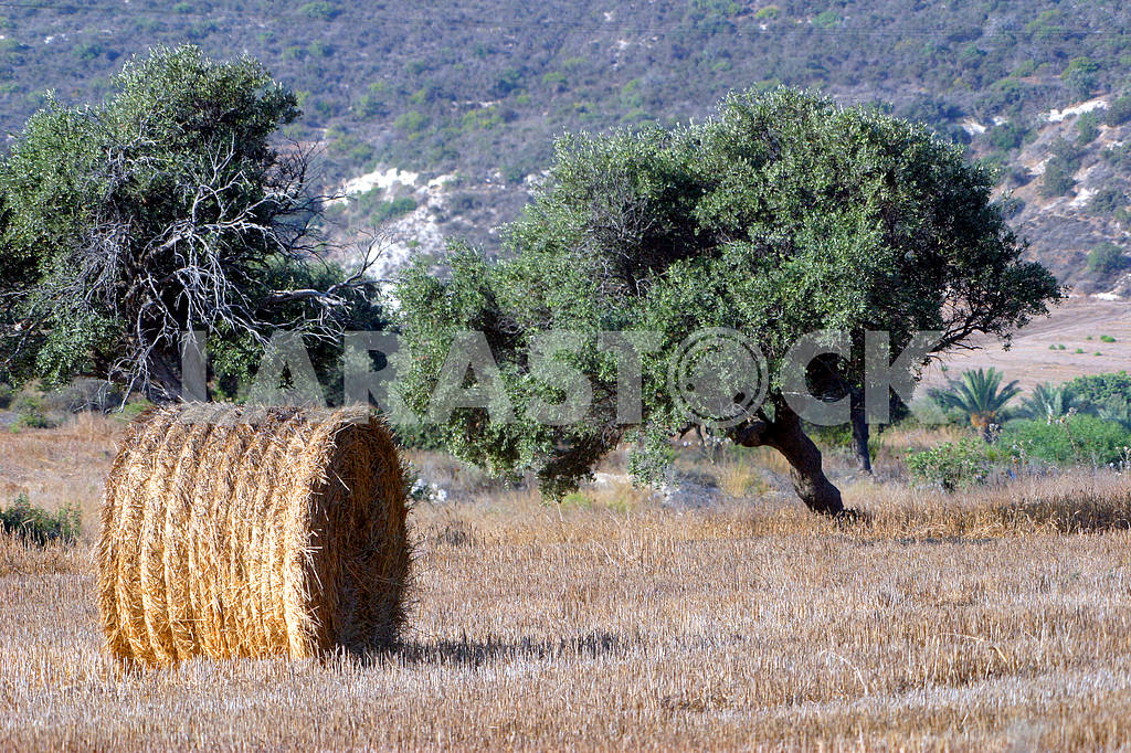 Hay on the field — Image 20214