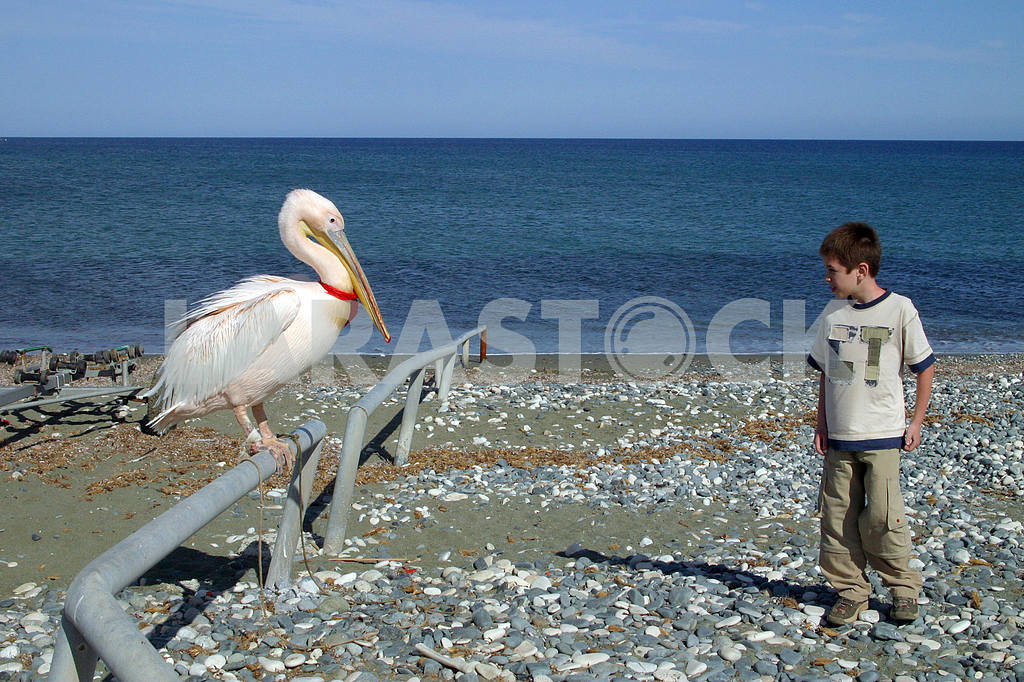 Pelican and boy — Image 20259