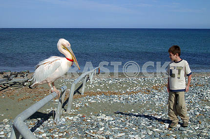 Pelican and boy