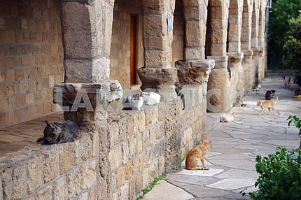 Monastery cats. Cyprus. Limassol