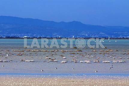 Limassol Salt Lake. Cyprus