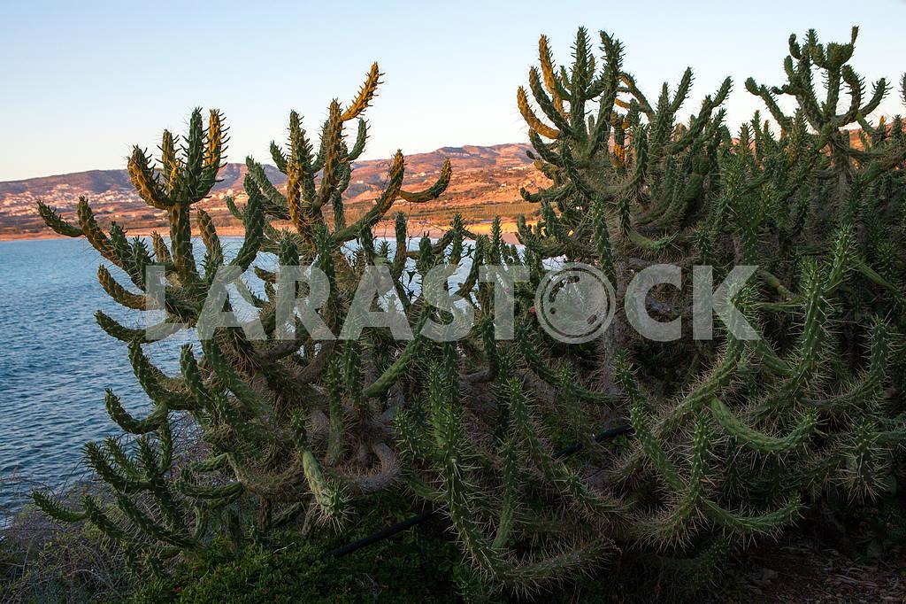 Big cactus on the sea shore — Image 20298