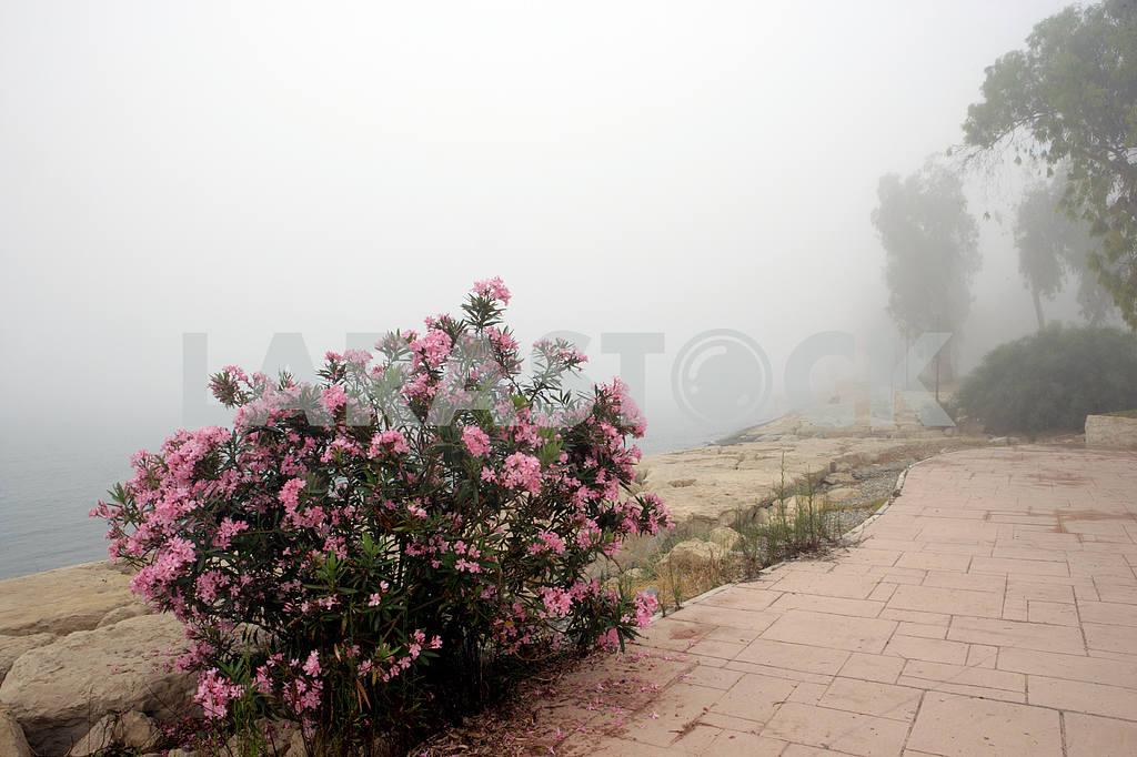 Scrub. Cyprus — Image 20318