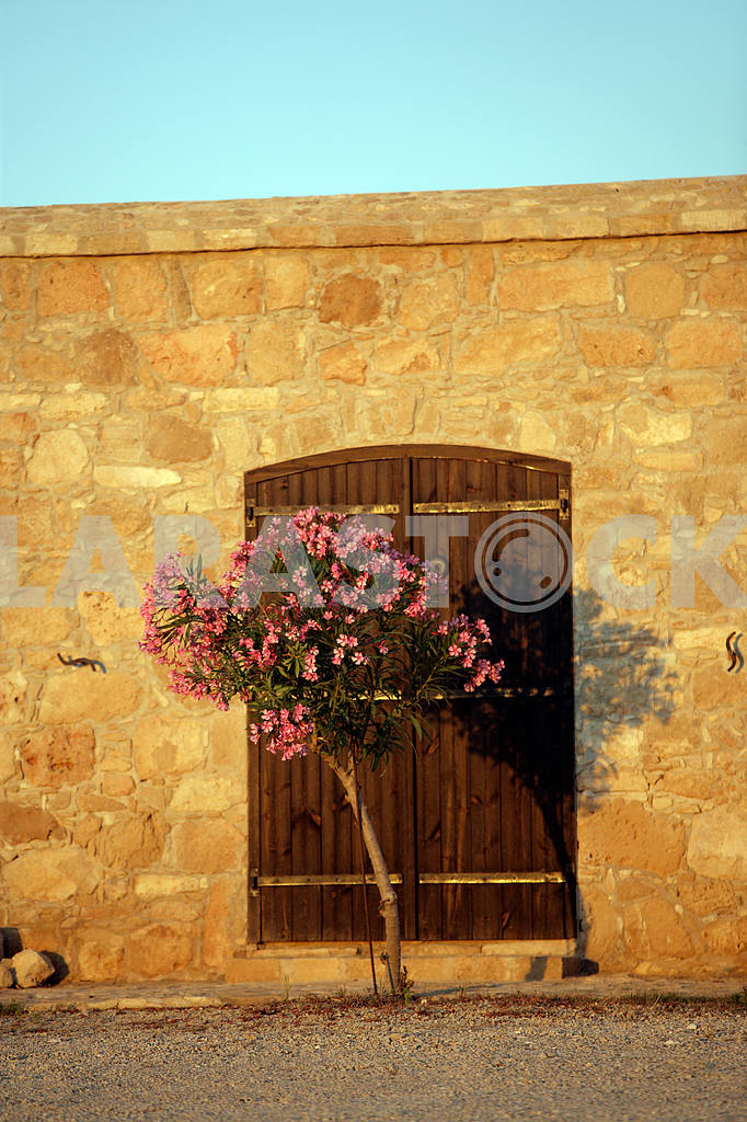 Oleander at the gate on the streets of Cyprus — Image 20348