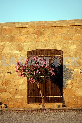 Oleander at the gate on the streets of Cyprus