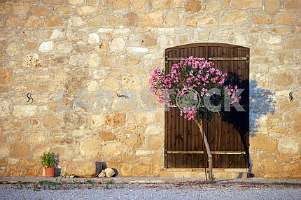 Oleander at the gate