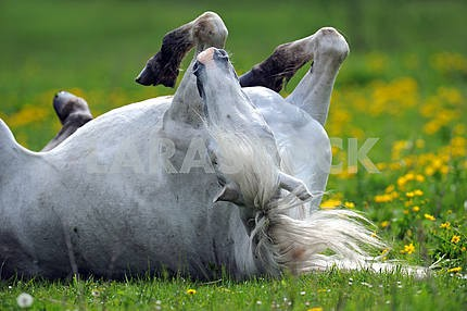 Horse on a green grass