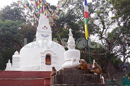 Temple complex (monkey hill). Nepal