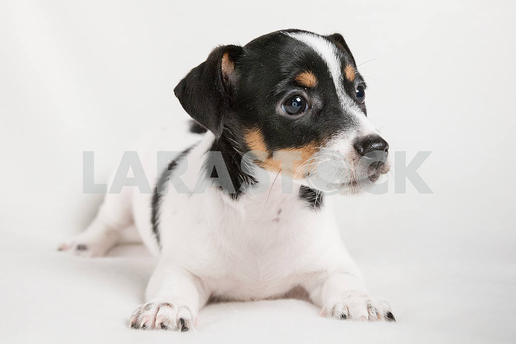 Puppy dog with black spots on the back — Image 21044