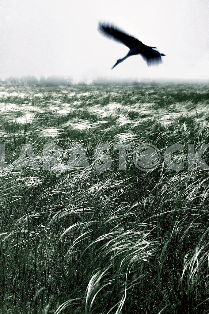 Zaporozhye feather grass — Image 21106