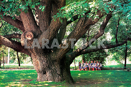 In the city of Zaporozhye is an oak, which is more than 800 years