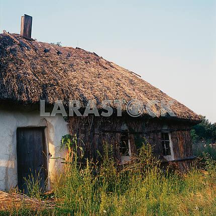 Перед зимой северная стена традиционного украинского дома покрывалась камышом. лето 2008