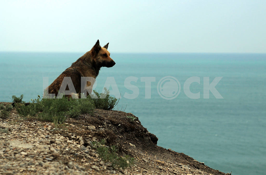 Lonely dog — Image 21598