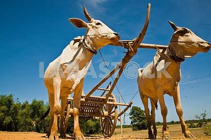 Labor bulls Cambodia