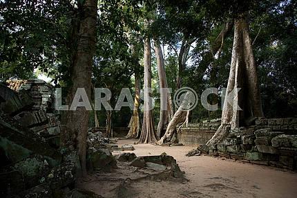 400 years on guard Angkor