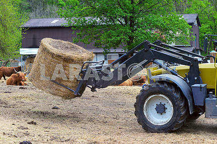Tractor driven hay feeder for cattle