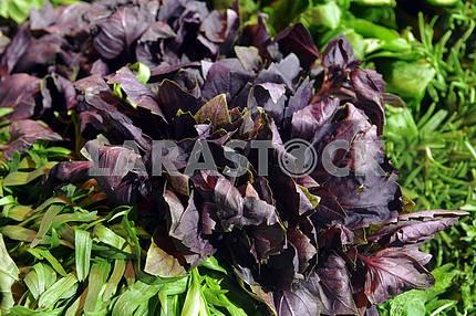 Greens and purple basi