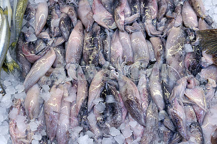 Squid on display in fish shop
