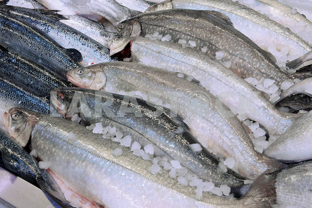Salmon in a fish shop — Image 21739