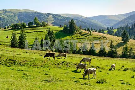 Karpaty, End summer
