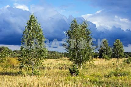 Деревья в поле и грозовые облака