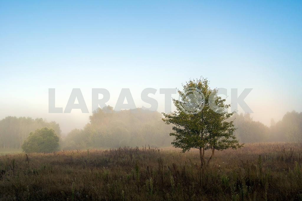 Дерево в туманном поле — Изображение 22000