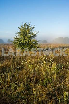 Дерево в поле