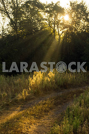The sun's rays make their way through the trees.