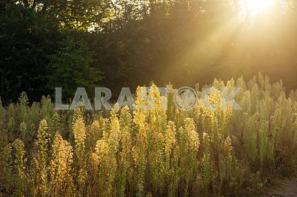 Лучи солнца пробиваются сквозь деревья.