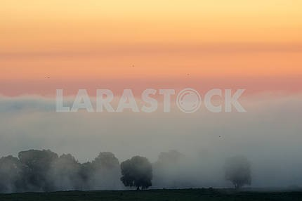 Fog over trees. The village of Mezin. Chernihiv region