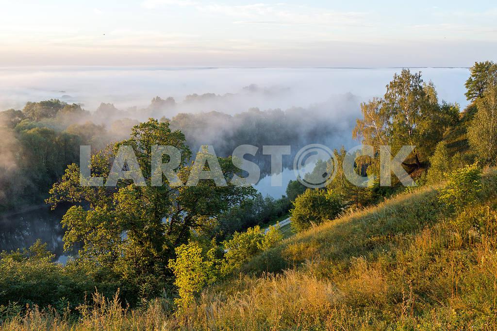 Gums Trees and fog. Mezin. Chernihiv region — Image 22046