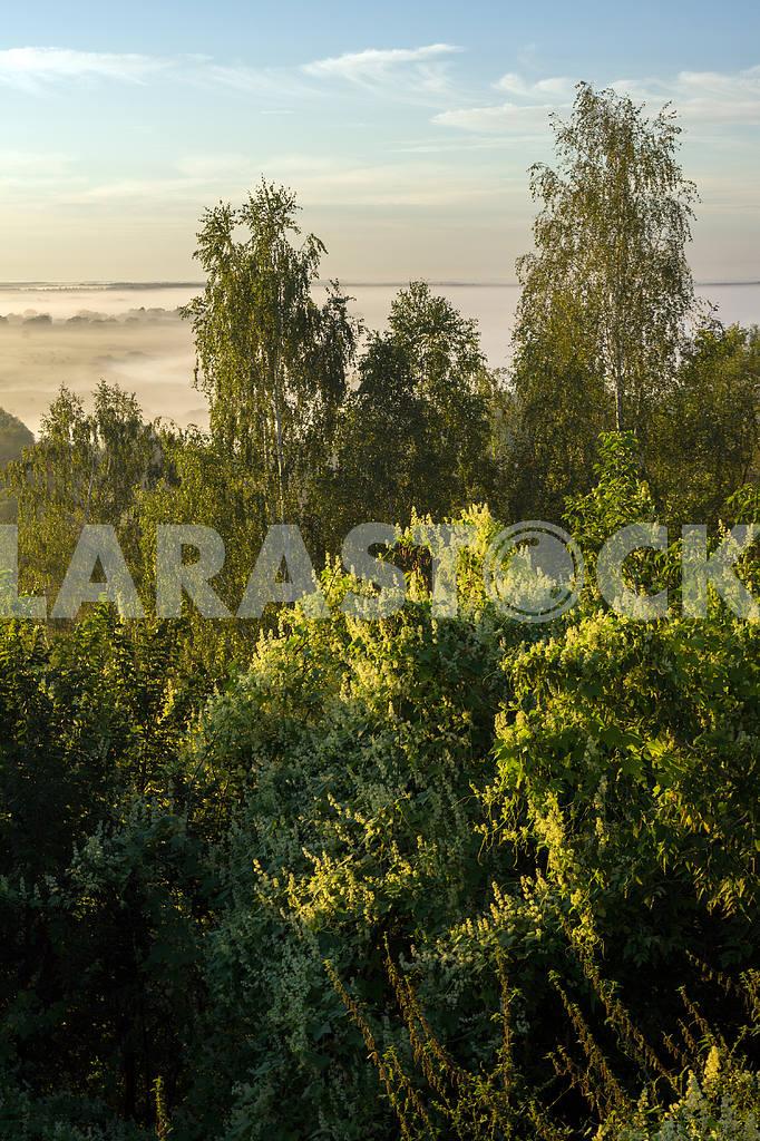 Trees against the sky. Mezin. Chernihiv region — Image 22054
