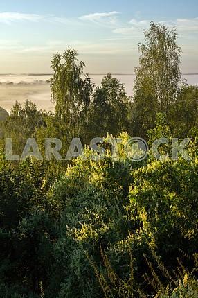 Trees against the sky. Mezin. Chernihiv region