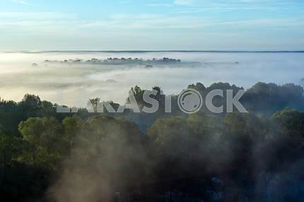 Crowns of trees shrouded in fog. The village of Mezin. Chernihiv region