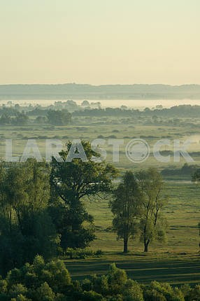 A field with trees in the fog. The village of Mezin. Chernihiv region