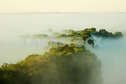 Blurred treetops. Mezin. Chernihiv region