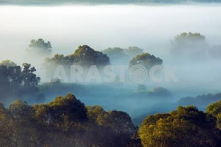 The trees in the fog. The village of Mezin. Chernihiv region