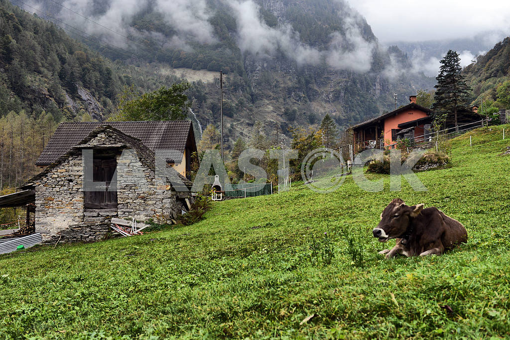 Mountain hut and cows at a Alpine pasture — Image 2218