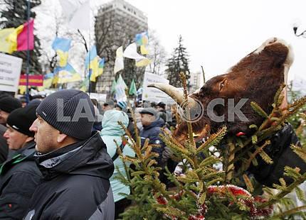 A rally of farmers near the Verkhovna Rada
