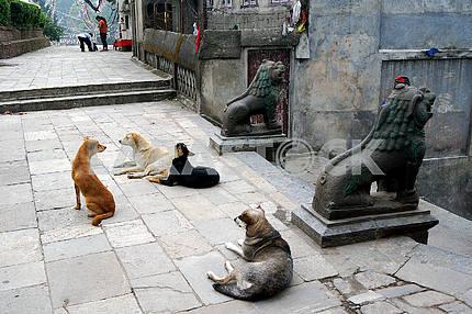 Stone lions, Nepal, Kathmandu
